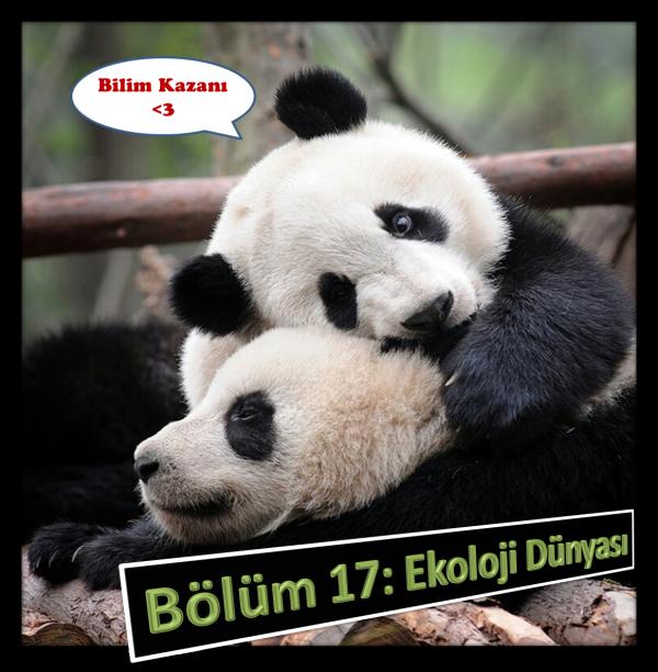 Panda Dondurma <3